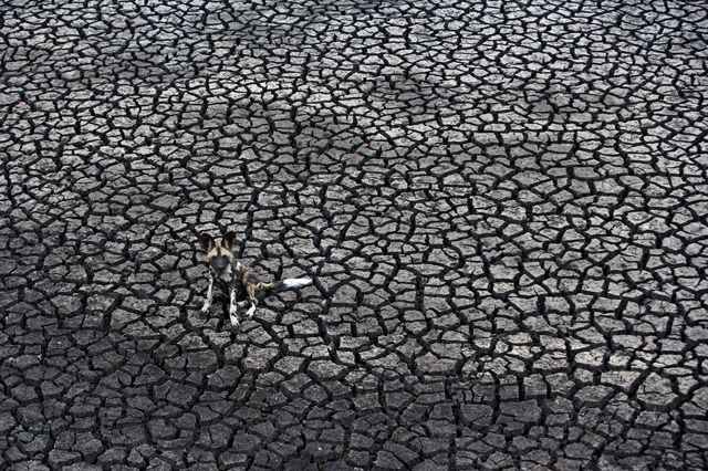 Winners of the 2012 Wildlife Photographer of the Year