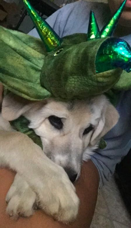 19 Pets In Halloween Costumes Who Really Just Want To Stay Home This Year  #funny #dog  #halloween #costumes