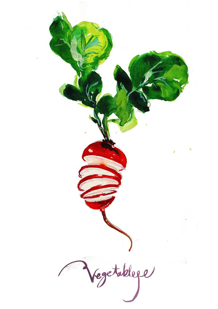 This is radish illustration by yujin #radish #illustration #food #salad #image #vegetable #drawing #illust #134340 #watercolor