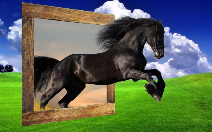 fotografia caballo-mustang-salvaje