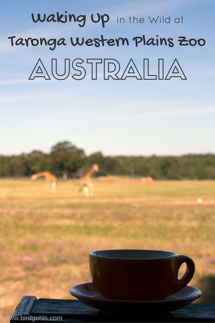 Wake up to Giraffes, Eland, Ostriches (and the odd Kangaroo) strolling outside your front door at Taronga Western Plains Zoo in Dubbo, NSW, Australia.