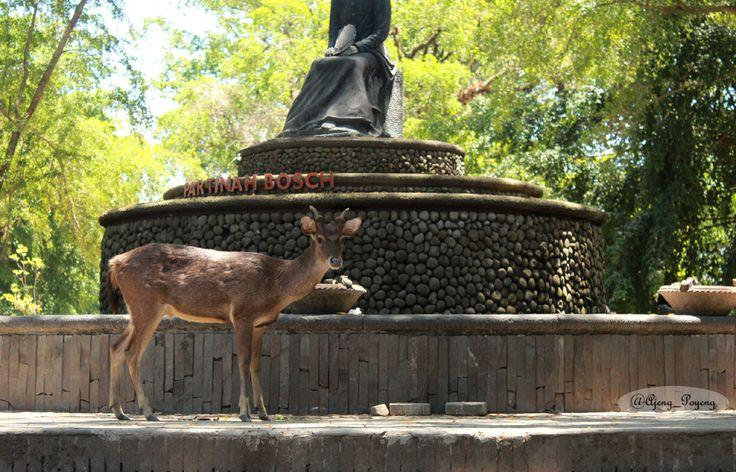 friendly deer at Balekambang Solo Indonesia