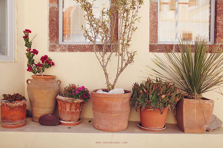 Цветы и пряные травы в больших глиняных горшках