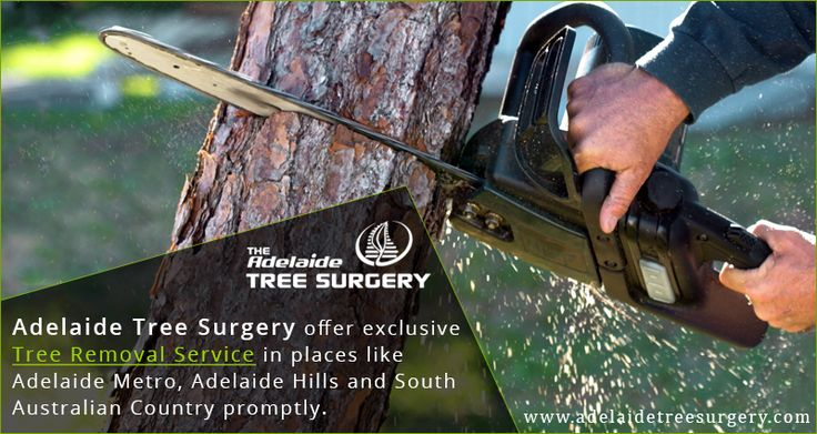 Tree Removal Adelaide - The Adelaide Tree Surgery  We offer exclusive tree removal service in places like Adelaide Metro, Adelaide Hills and South Australian Country promptly. Contact us today. #Adelaidetreesurgery  http://www.adelaidetreesurgery.com/service-tree-removal.php