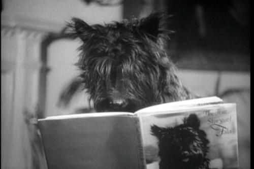Fala reading his biography-the most loved White House dog of all time!