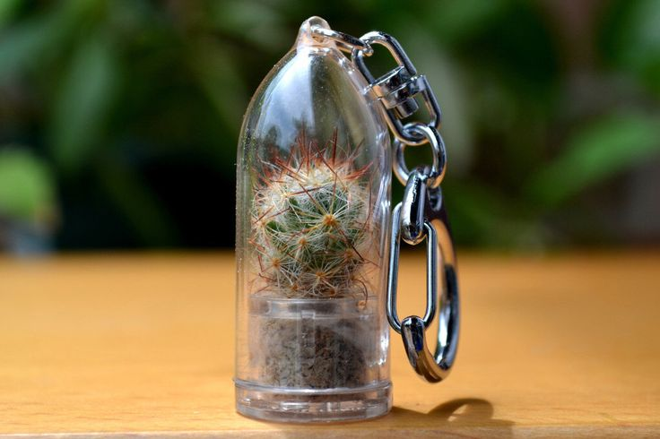 Shining Knight Cactus Terrarium Plant Keychain Accessory Clip by WearItMiniPlants on Etsy https://www.etsy.com/listing/163728331/shining-knight-cactus-terrarium-plant