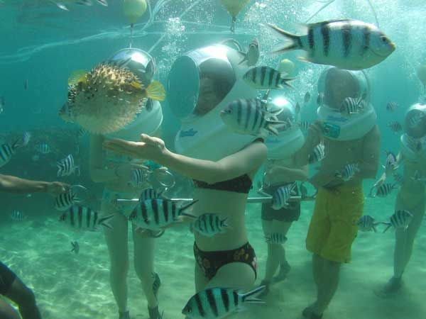 a new perspective on fish! walk with them in Bali