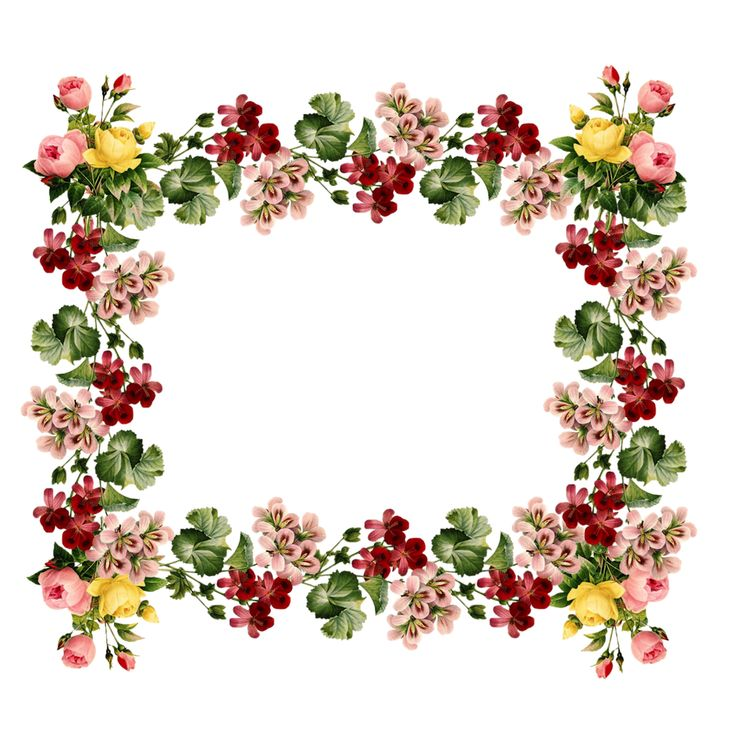 1000+ images about frames on Pinterest | Floral border, Clip art ...