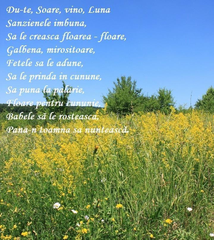 De Sanziene...