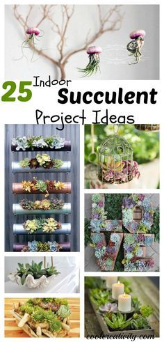 25 Indoor Succulent DIY Project Ideas More