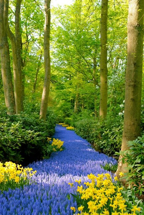 make a flower stream!!Paths, Colors, Beautiful, Gardens, Pathways, Places, Blue Flower, Rivers, Netherlands