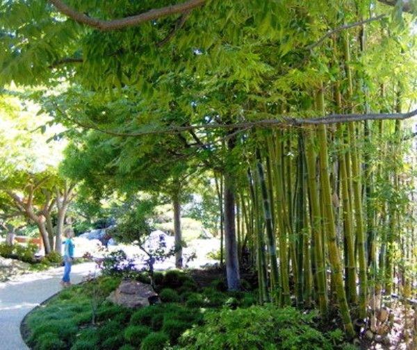 209 best Bamboe tuin images on Pinterest Bamboo garden Gardens