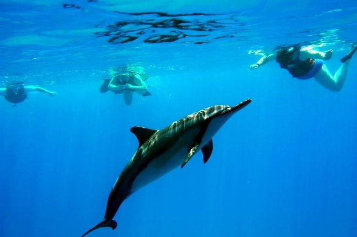swim with the dolphins in sydney-#7