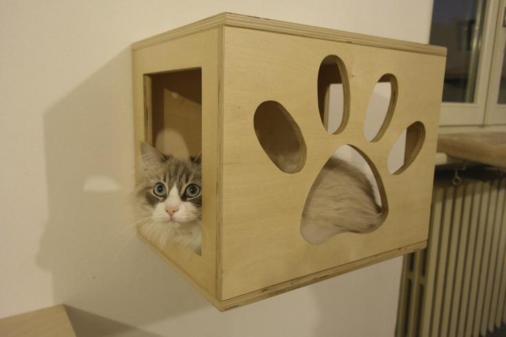 cat's cube