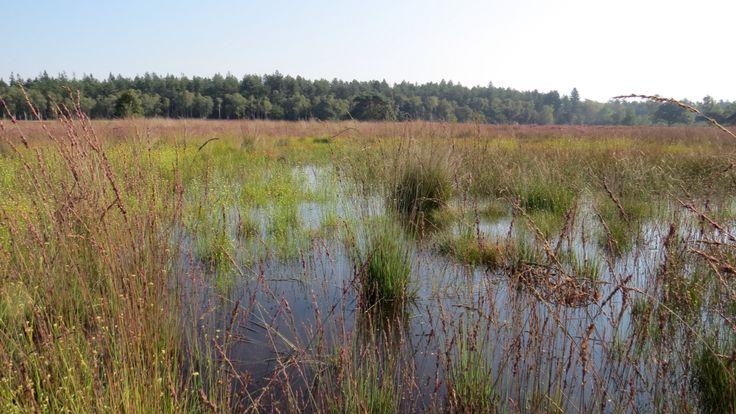 2015-08-23 Veel water op de Tongerense Heide