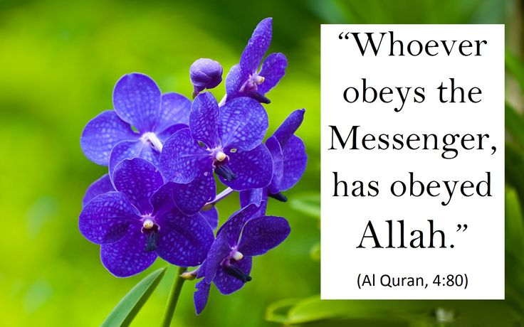 Obey the Messenger pbuh).