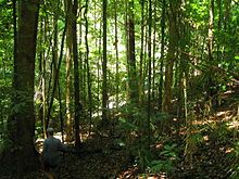 Daintree Rainforest - Wikipedia, the free encyclopedia