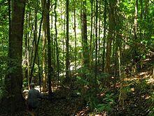 Daintree Rainforest - Wikipedia, the free encyclopedia