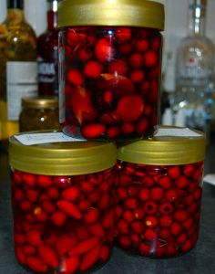 Hawthorn Preparations - hawthorn/rosehip vinegar - hawthorn, rosehip and ginger in port and brandy, hawthorn tincture in wodka
