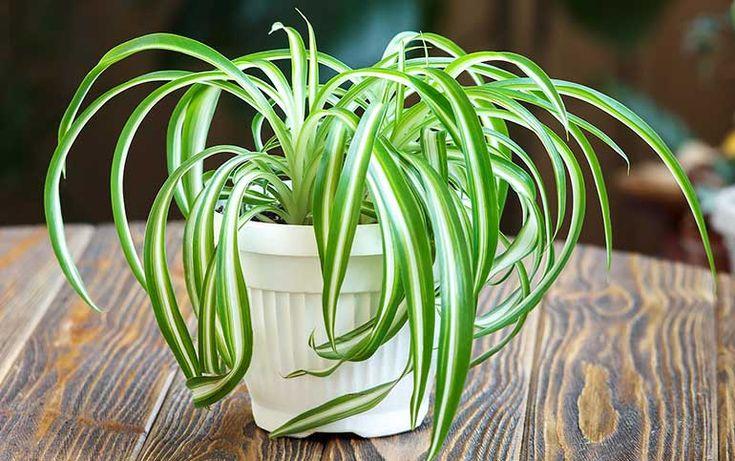 17 Best Ideas About Best Indoor Plants On Pinterest