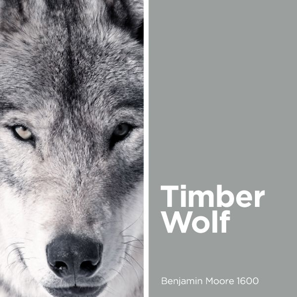 Best Timber Wolf Benjamin Moore 1600 Our Favorite Colors 400 x 300