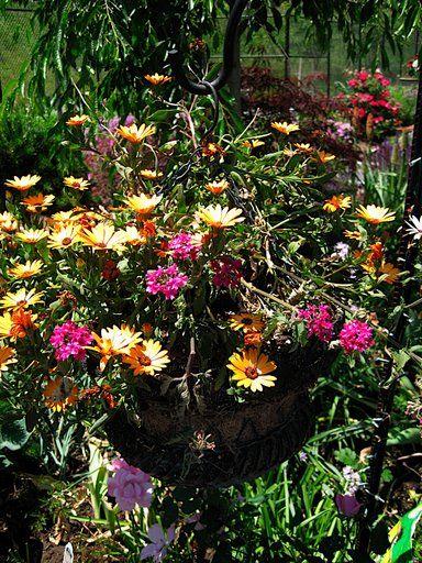 Hanging Flower Baskets In Full Sun : Google image result for http greengardenista