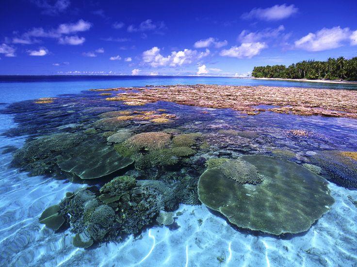 Il riscaldamento delle acque del Pacifico settentrionale e le conseguenti modifiche ambientali hanno comportato in questi anni ingenti danni ai coralli che