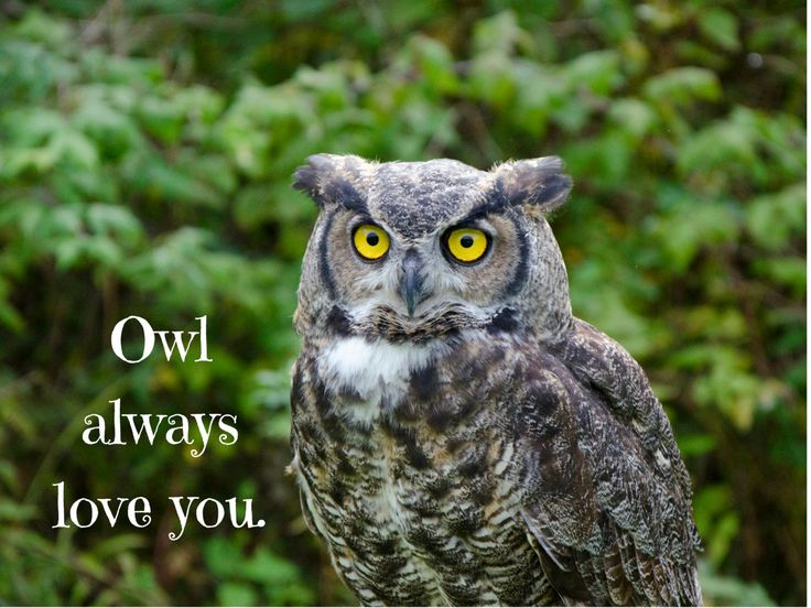 Owl Always Love You Photo Greeting Card, 4x5 miss you cards blank inside just…