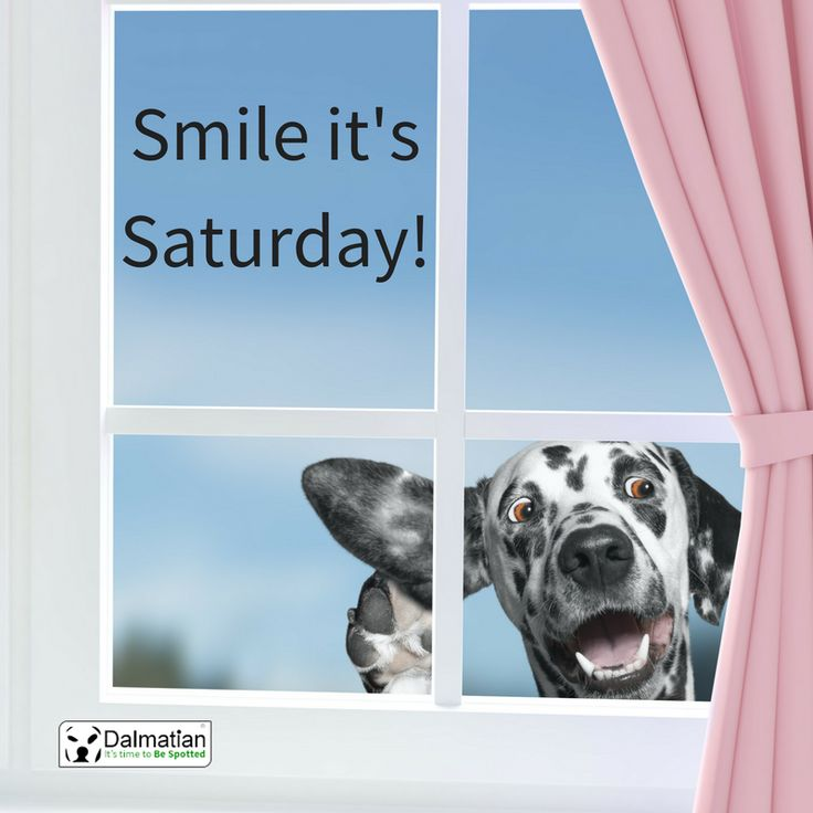 Smile it's the weekend. Waving Dalmatian dog. Saturday positivity.