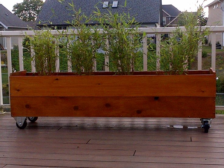 Dragons head bamboo in planter box with wheels for privacy for Outdoor planter screen