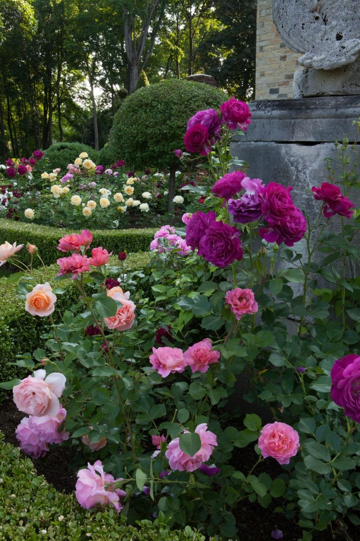 Rose garden ideas pictures - Carolyne Roehm Roses In The Garden Wow What Beautiful Colors