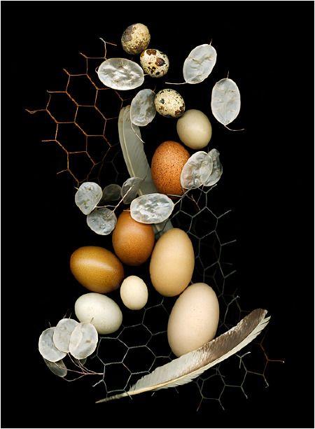 Nesting 2, Still Life - Scanner Photography By Ellen Hoverkamp