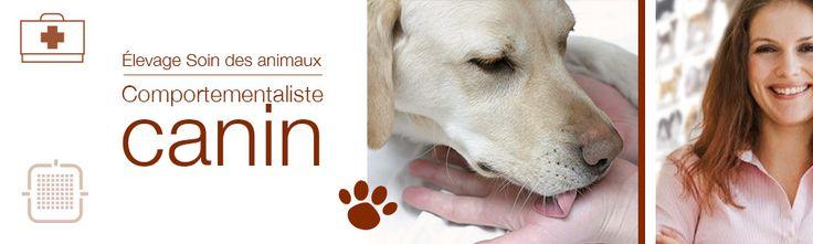 Vous adorez les chiens ? Vous rêvez de faire de votre passion votre métier ? Devenez comportementaliste canin!