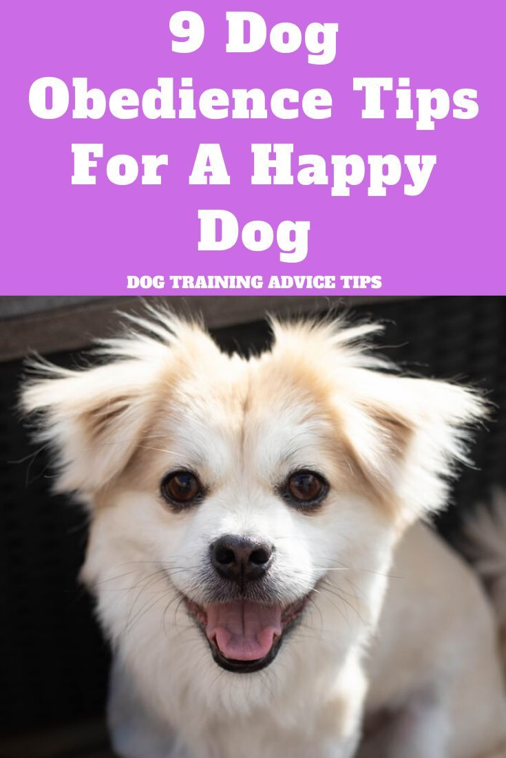 9 Dog Obedience Tips For A Happy Dog Dog Training Happy Dogs Dogs