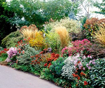 Low water garden plan.    Alma Potschke' Aster  'Autumn Joy' Sedum  Crested Iris  Honesty  'Karl Foerster' Feather Reedgrass  Lady's Mantle  Lamb's Ears  'Rosy Glow' Barberry  'Ruby Glow' Sedum  Spurge  Sweet Alyssum  Redtwig Dogwood  'White Nancy' Lamium