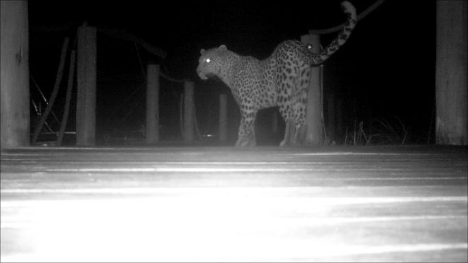 What stirs at night at Xigera Camp 6