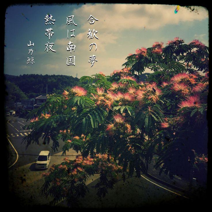 合歓の夢 風は南国 熱帯夜[山乃鯨] #haiku #photohaiku #poetry #summer #micropoetry #夏 #フォト俳句 #japanese #写真俳句 #snapseed #jhaiku #phonto #mpy #vss
