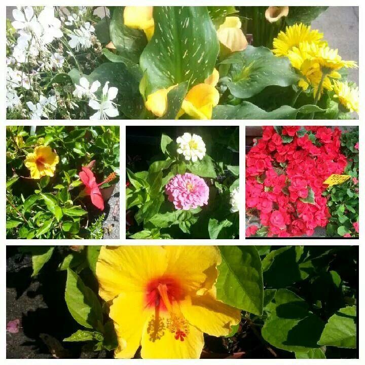 Eres un #invernadero y necesitas que te #lleve tus #flores? Llama a #Taxi #Nigrán #María 653736754 o pide #presupuesto también por #e-mail: merilempicka@gmail.com