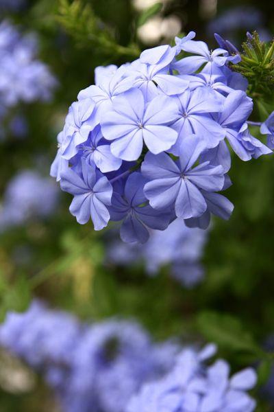 「富山、お花見情報その1」の画像 大人の遊び、33の富山旅 staff …  Ameba (アメーバ)