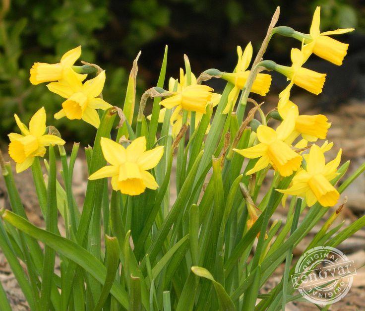spring flowers renovar design