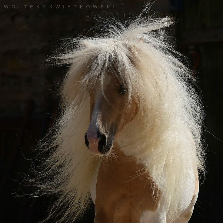 Horse with a beautiful hair day.