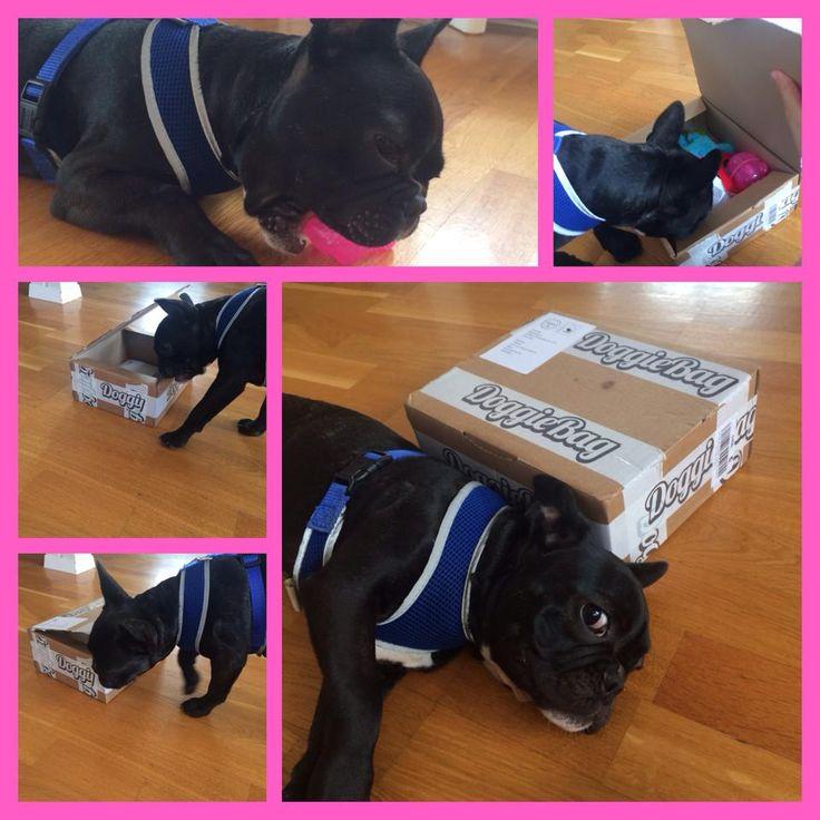 Theodor - DoggieBag.no #DoggieBag #Hund