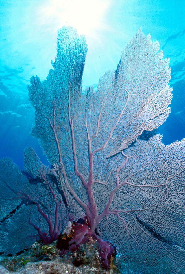 Los arrecifes coralinos, un hermoso ecosistema marino