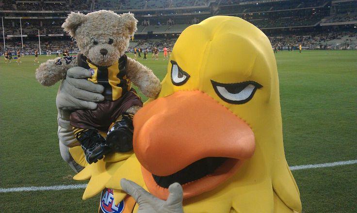 2012 LJ Bear meets Hawka