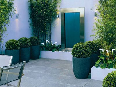 Simple courtyard garden with patio slabs and box plants in pots - white walls