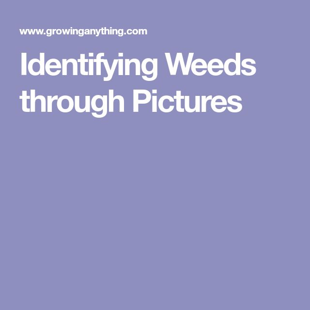Identifying Weeds through Pictures