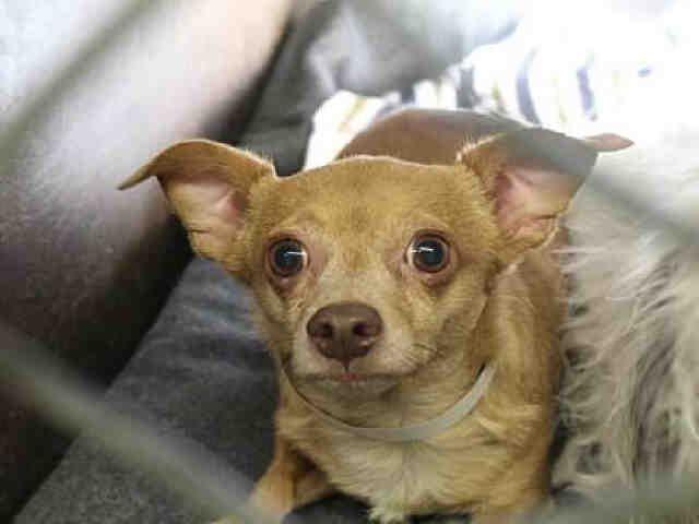 Petharbor Com Animal Shelter Adopt A Pet Dogs Cats Puppies