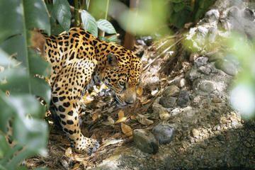 Belize Zoo, Belize City, Belize