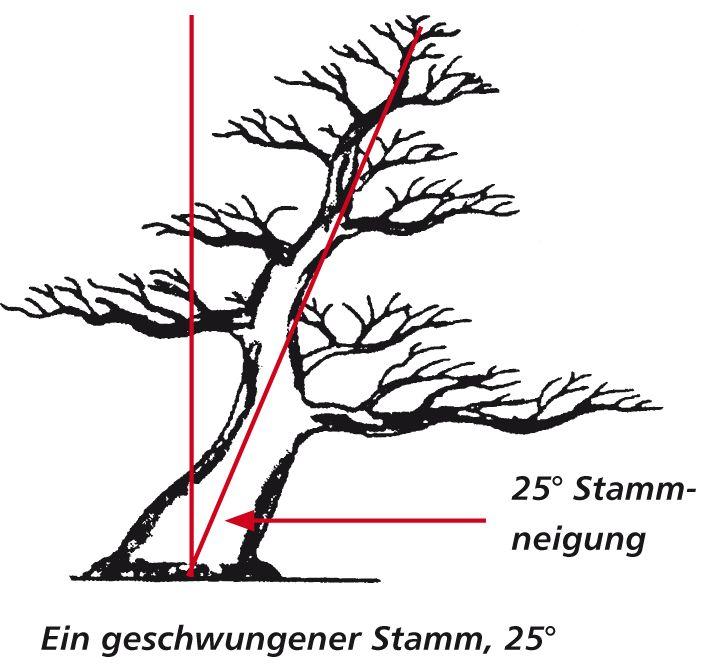 4551 best images about bonsai miniatura  shohin