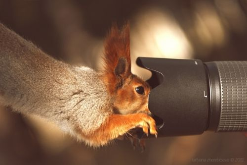 Smile!: I M Ready, Funny Animals, Animal Twist, Squirrels, Animals Interested, Awesome Photography, Cameras